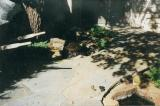 Flagstone walkway with water feature